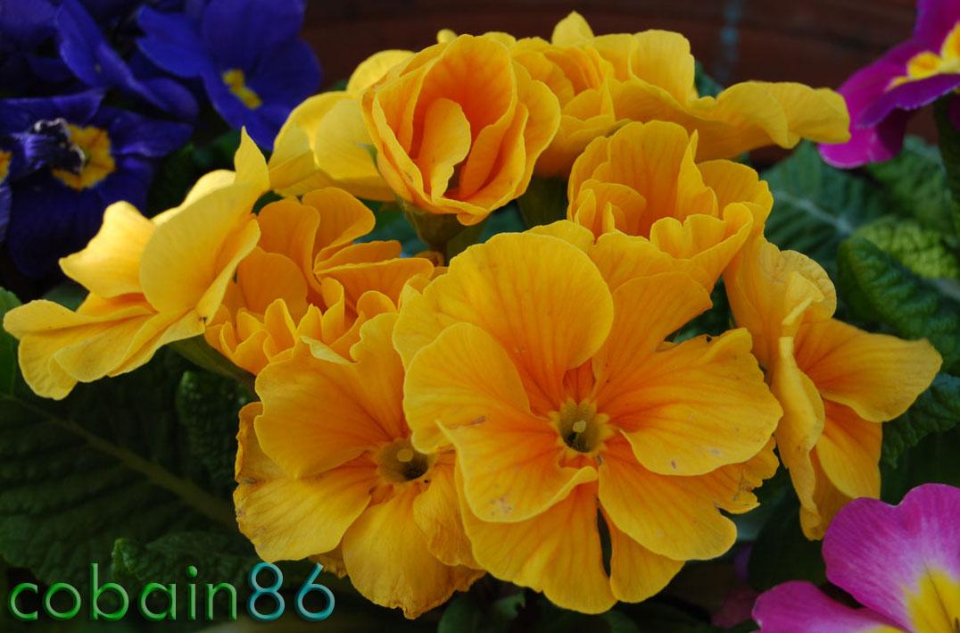 fiore_giallo