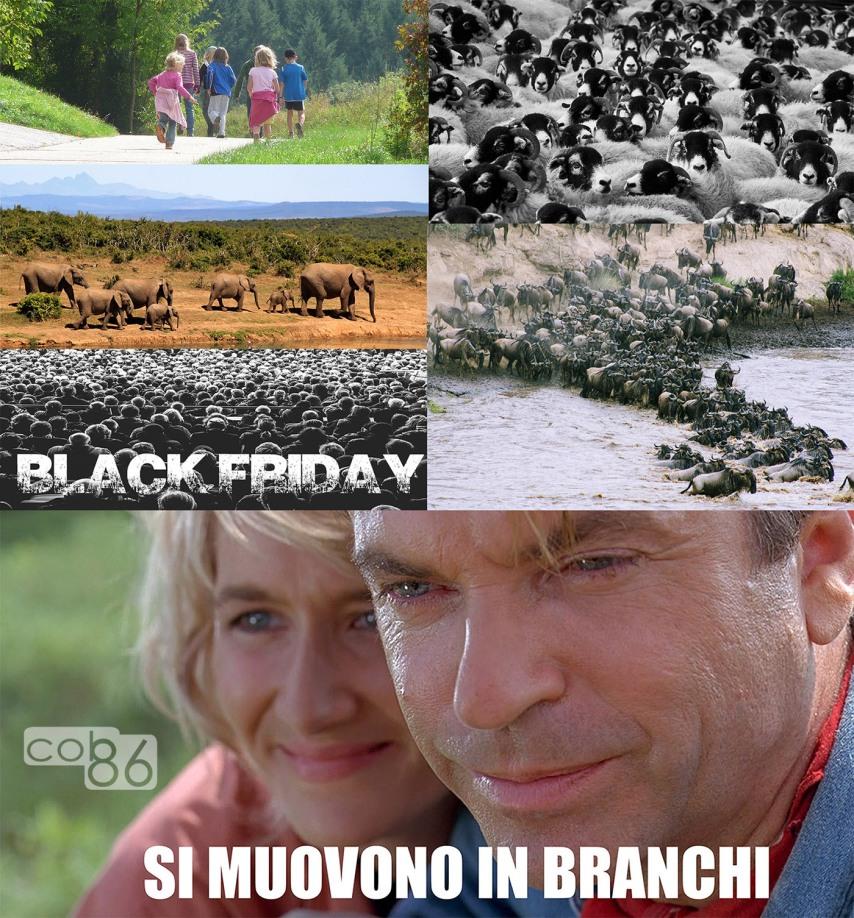 si_muovono_in_branchi_mandrie