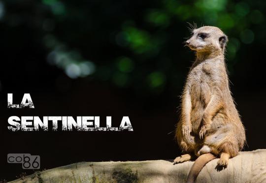 suricati_sentinella_blog